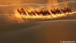 《沙漠骆驼》小李飞琴翻唱