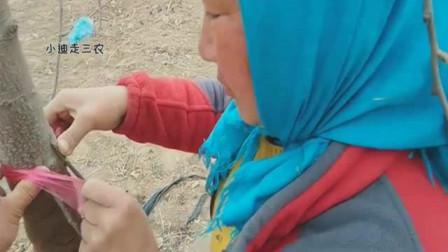 """苹果树腐烂了,这个农村女人正在给树做""""心脏搭桥手术"""""""