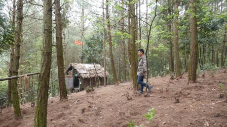 贵州95后兵哥哥隐居深山养鸡 被老鹰猫头鹰黄鼠狼吃了两千只
