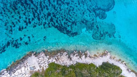【生物大师 初中】生物群落——大堡礁