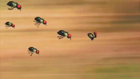 昆虫总动员:马蝇被小瓢虫挑衅,被蜘蛛给发现了,这下有好戏看了