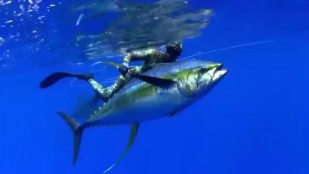 捕鱼:捕鱼达人潜水捕鱼,下水没一会就收获一条大鱼,看来能卖个好价钱