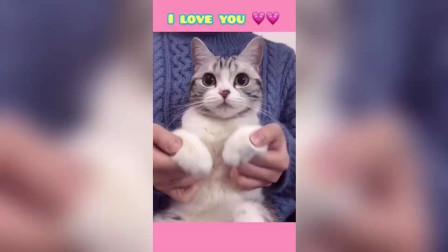 小泡芙,你爱我吗?