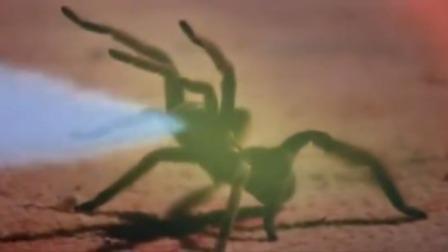 五毒蜘蛛毒性天下无敌,不料姑娘比它更毒,吓的蜘蛛逃命都来不及