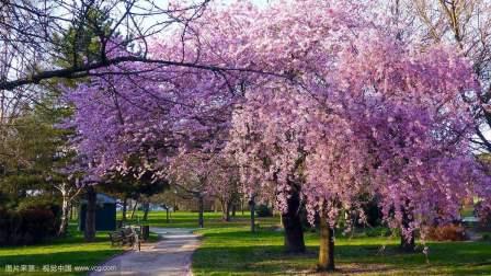 生命是一树花开 作者 余秋雨 朗读 良辰美景