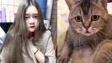 网友说这是全网最色的猫咪,主人:都是被你玩坏的!