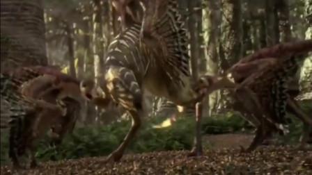 人与自然:中华鸟龙的狩猎过程完全靠家族成员配合,显现了家族的和谐一幕