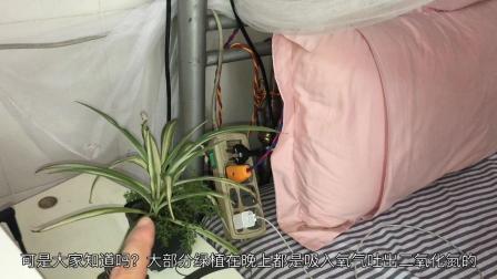 在床头边放一盆绿植到底好不好?看完我才明白,以前真的不知道!