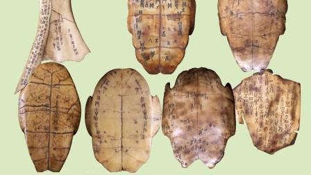 火车上的旅行,走进安阳殷墟博物馆,揭秘甲骨文为何写在龟壳之上