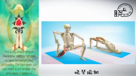 瑜伽解剖41 股四头肌 晓琴瑜伽微课堂