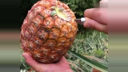 凤梨和菠萝是有区别的,切开凤梨,这果肉美极了