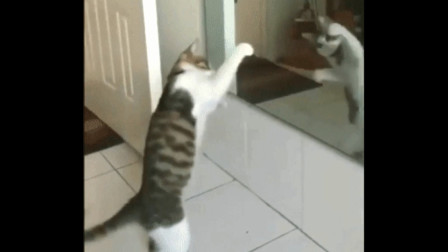 小猫咪照镜子 跳起舞来 太搞笑了
