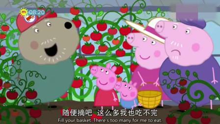 小猪佩奇:狗爷爷的西红柿是随便丢几粒种子就长好了,结了好多西红柿