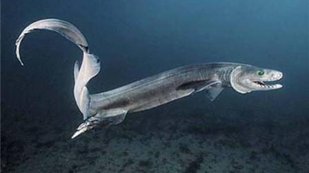世界上最丑的生物,长1.5米被认为是外星人宠物,以鲨鱼为食