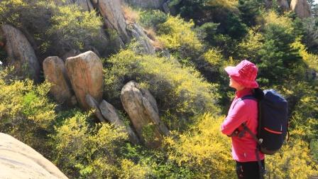 《徒步山东》泰山黄崖山连翘花海穿越19.4.20