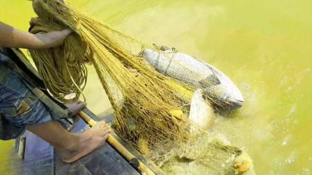 农村小哥靠养鱼捕鱼为生,撒一网,看看这鱼有多大一条?