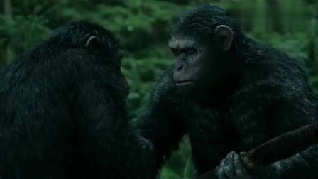 猩球崛起:一群大猩猩围捕狗熊,利用工具?