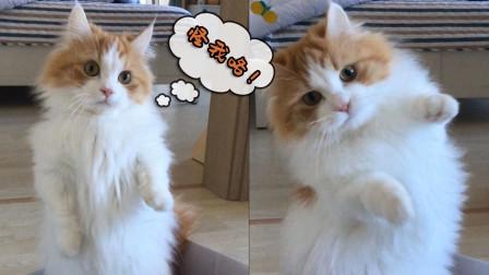 """短腿猫想爬上晾衣架,结果腿短变成了练单杠!猫腿:""""怪我咯!"""""""