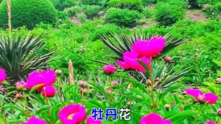 """游宝鸡植物园——富贵园,了解""""武则天诏令植牡丹""""的故事"""