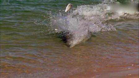 头次见大鱼在海边疯狂游荡,感觉不正经的样子