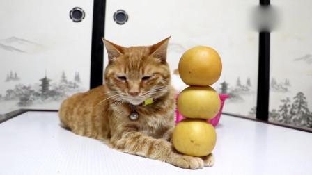 橘貓:主人你玩夠了沒有?本喵不想跟你玩了!