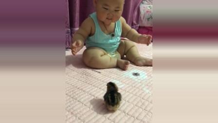 小宝宝看见床上有一只小鸡,接下来小宝宝的反应太可爱了!