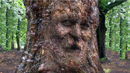 地球上最诡异的一棵树,4000年来食人无数,独特进食方式让人疑惑