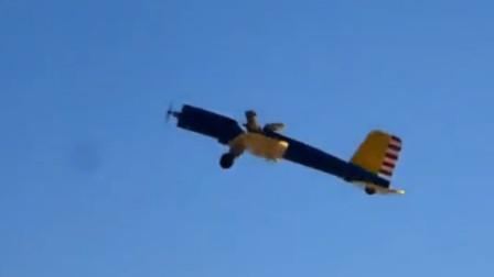 国外动物成精系列,松鼠还会开模型飞机?网友:开飞机的小贝塔