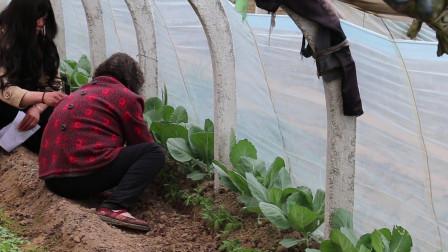 走进农村,今天带大家了解一下,西红柿的种植技巧与管理方法。