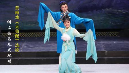 黄梅戏《天仙配》选段:《树上的鸟儿成双对》,江李汇、谢军演唱