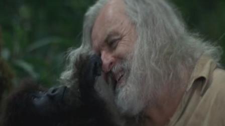 大叔走进森林,和猩猩生活两年后,抛弃妻女也要和猩猩在一起!