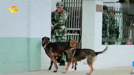 奇兵神犬:张馨予警犬艾勒薇斯与冠军争夺一诺之战,爱犬吃醋