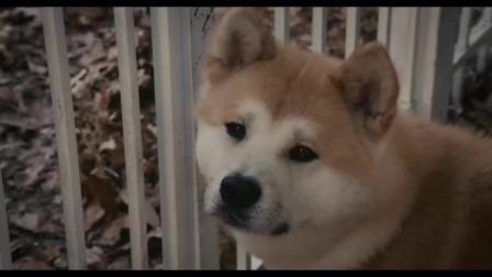 忠犬八公:这段真真看哭了,狗永远是人类忠诚朋友,善待朋友