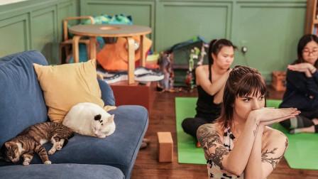 美国盛行猫咪瑜伽,练习时有猫走来走去,不被影响才算领会终极奥义