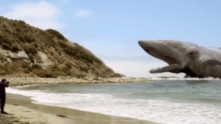 小伙岸边对着白鲸开枪,没想到白鲸直接游上岸,一抬头瞬间吓坏了