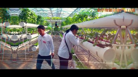 中国(寿光)第十八期中荷无土栽培绿色蔬菜种植培训班,宣传视频