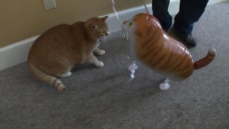 買了一個玩具貓嚇唬橘貓,結果被一巴掌拍爛,女主在一旁笑瘋了!