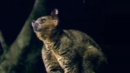 """大鹰猴真是个""""无情""""的捕食者"""