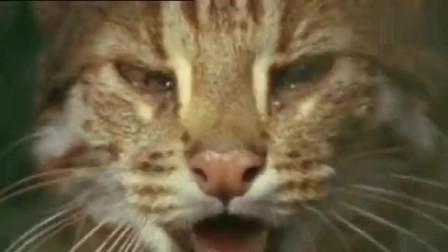 """""""大猫""""不愧为短跑冠军"""