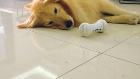 养狗人士的福音,这款逗狗神器,能把狗狗累瘫!