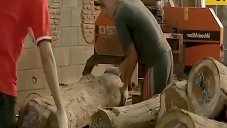 """中国最""""珍贵""""的树,1公斤卖到9000元,曾经还被人当柴火烧"""