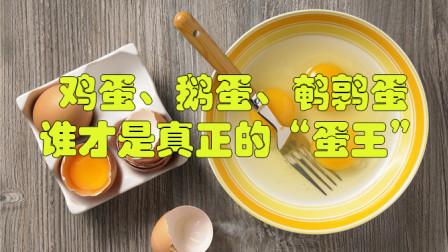 """鸡蛋、鹅蛋、鹌鹑蛋,谁才是真正的""""蛋王""""?真相总是出人意料"""