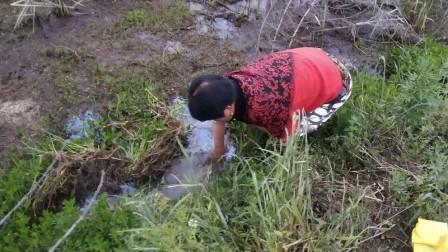 农村外婆野外收龙虾网很辛苦,早上5点出门收网,结果没收到龙虾
