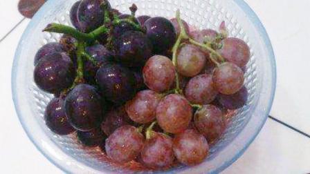吃了这么多年,你知道提子和葡萄的区别吗?