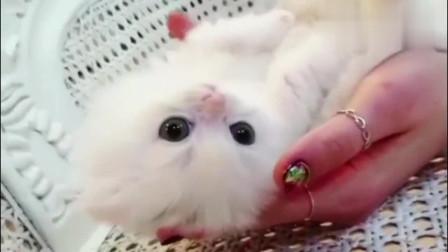 小猫咪为何这么可爱!少女心都被萌炸了!