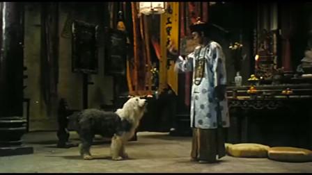 狗有一个做人的梦想 开心佛成全了它!