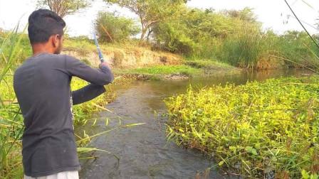 小小河流鱼儿多多,农村小哥抛了几杆,各种鱼儿和螃蟹纷纷咬钩