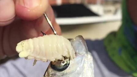 """来自""""外星""""的寄生虫,可以吞食掉一个地区所有鱼类的舌头"""