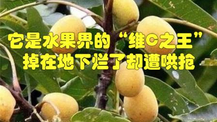 """它是水果界的""""维C之王"""",新鲜时没人吃,掉在地下烂了却遭哄抢"""