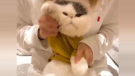 猫咪生气的样子好可爱,真想把它放回老家去抓老鼠!